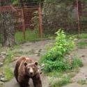 8_Palics_allatkert_medve